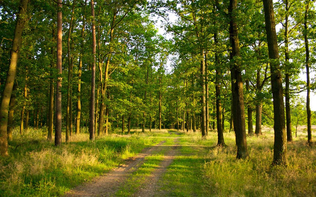 нацпарк Гомольшанские леса, Украина