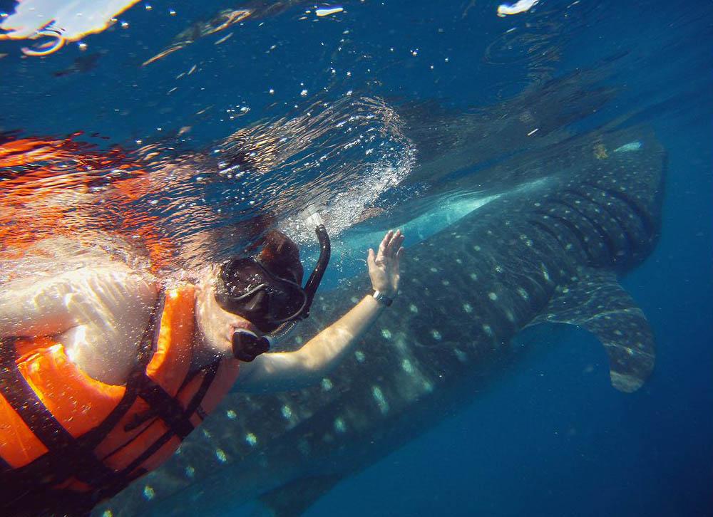 плавание с акулами на Юкатане