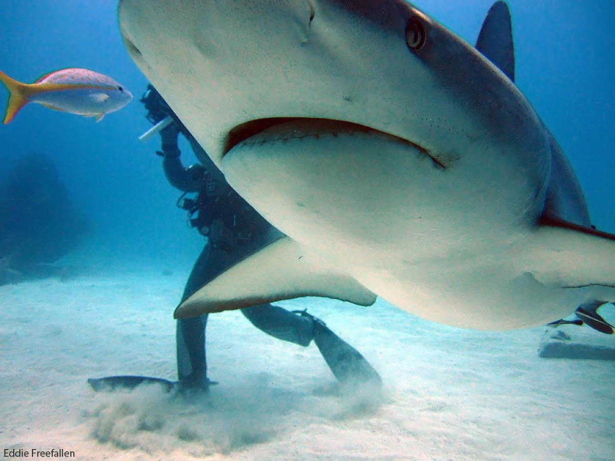 плавание с акулами на острове Волка