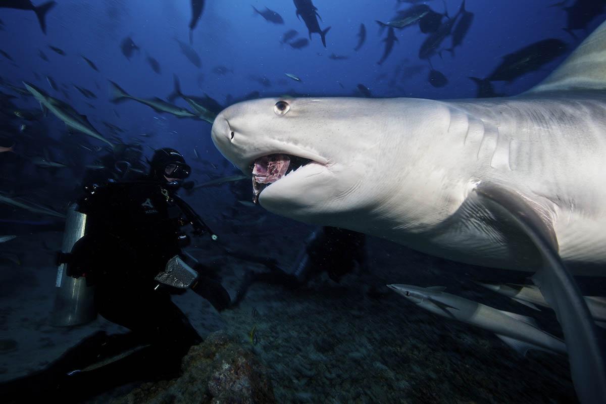 плавание с акулами в лагуне Бека