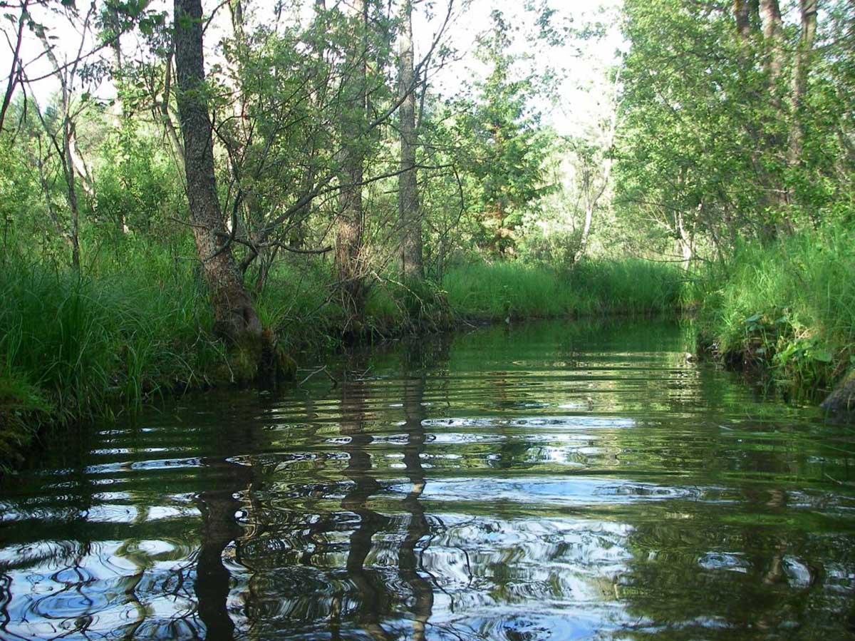 протока в озеро Щучье