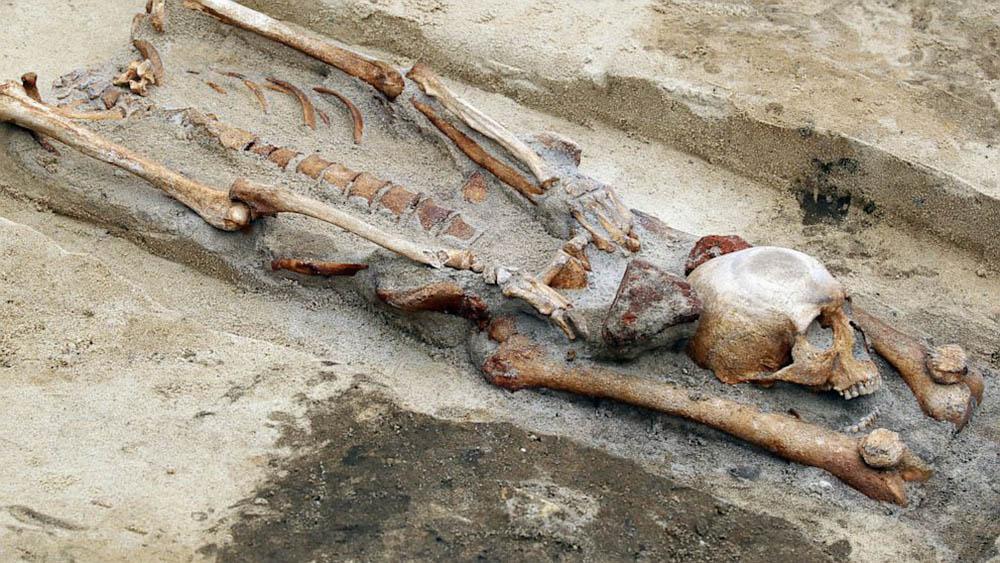 скелет обезглавленного вампира