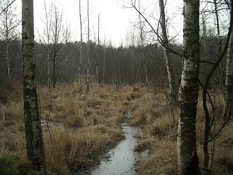 Алешкинское мезоторфное болото, Москва