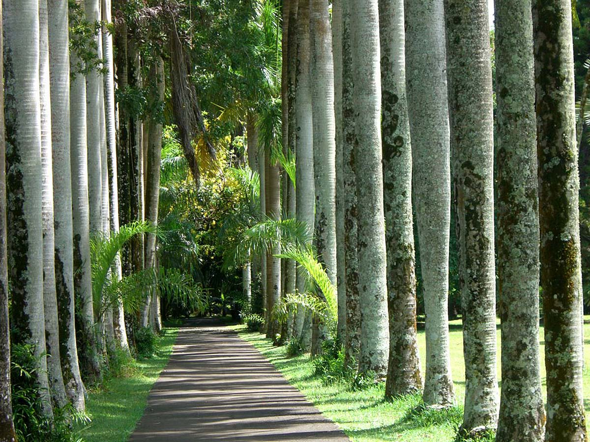 Palm alley, Pamplemousses Botanical Garden