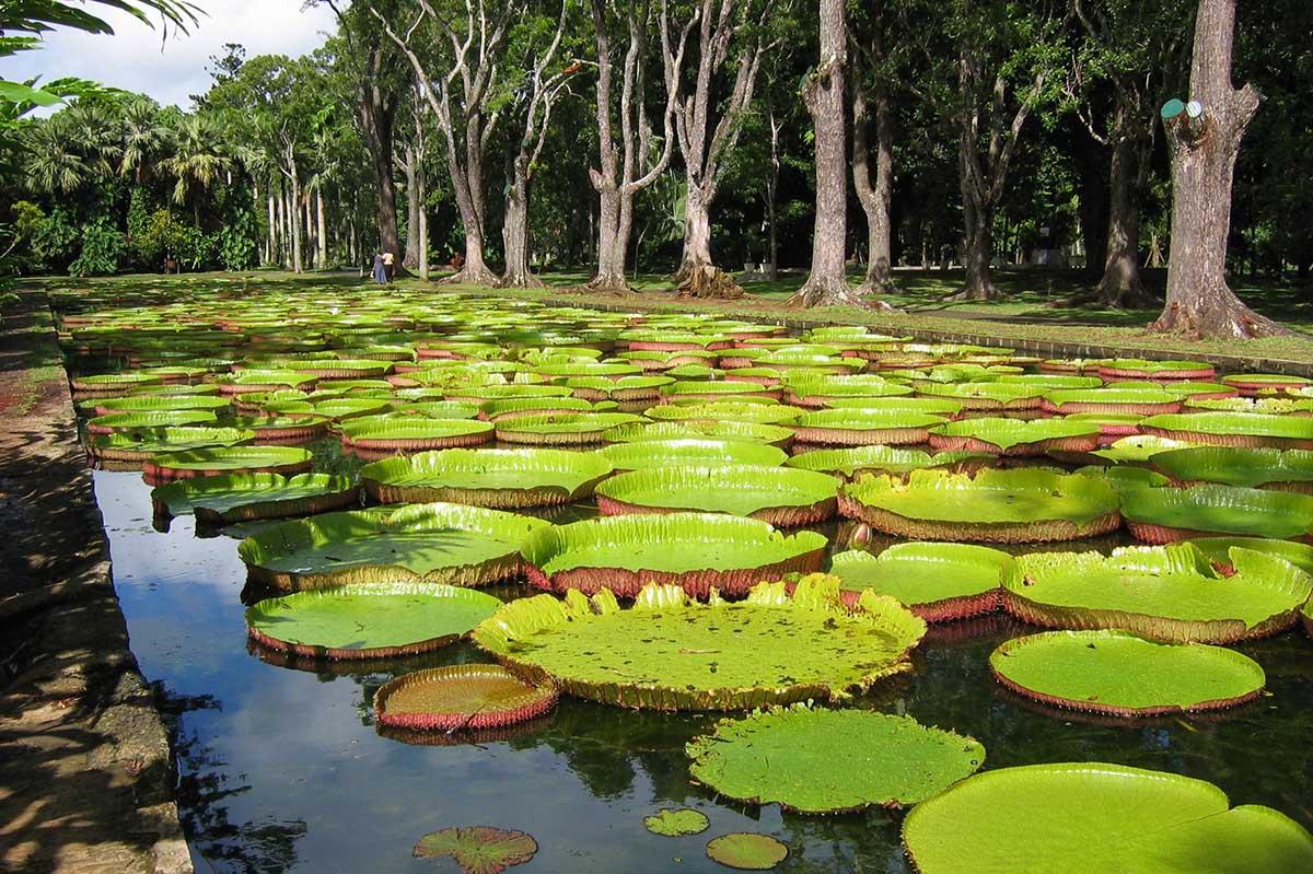 Pamplemousses Botanical Garden, Mauritius