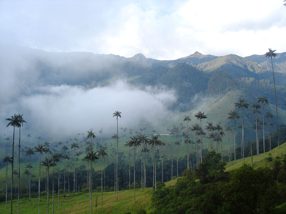 долина Кокора, Колумбия