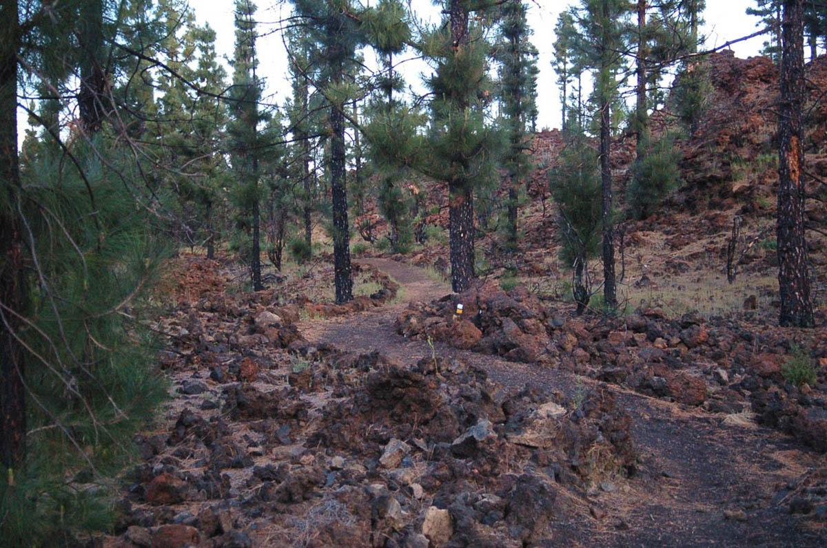 лес возле вулкана Чиньеро