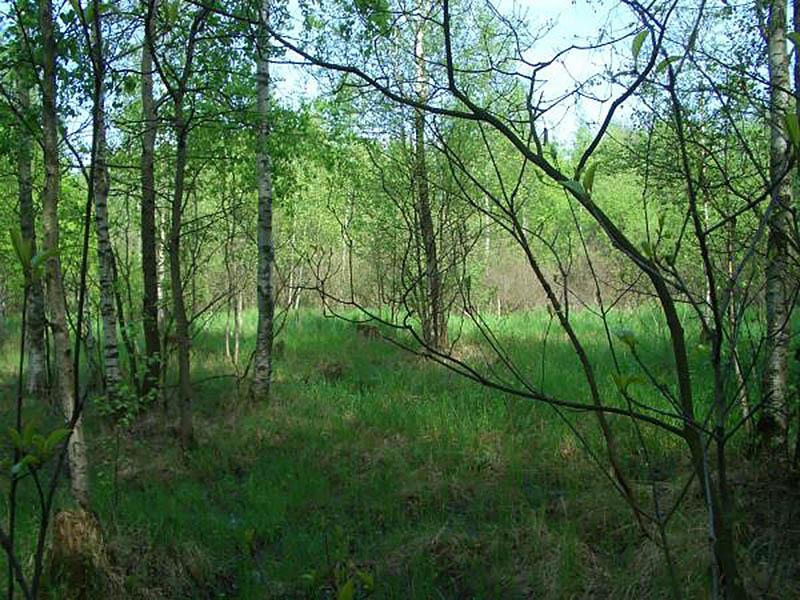 мезоторфное болото в Алешкинском лесу, Москва