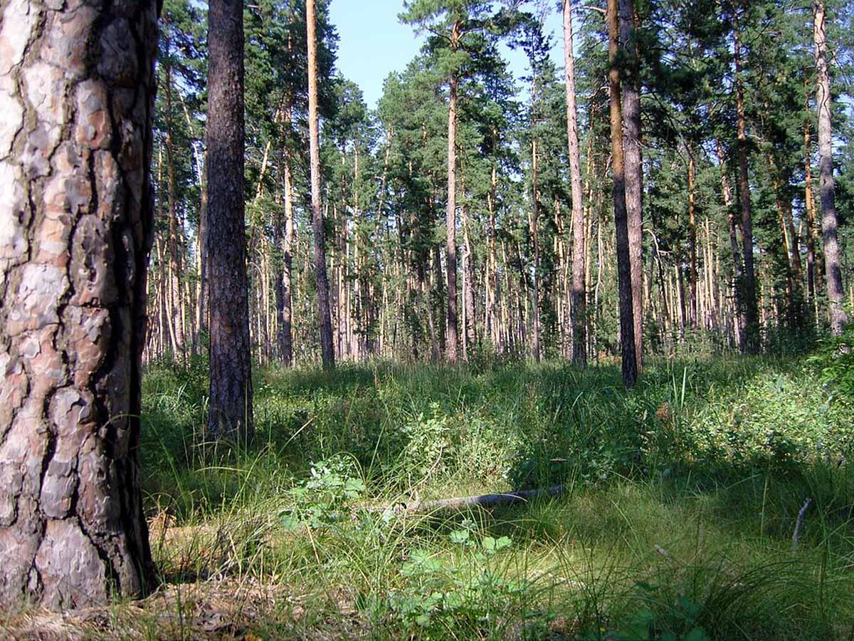 нацпарк Бузулукский бор, Оренбургская область, Россия