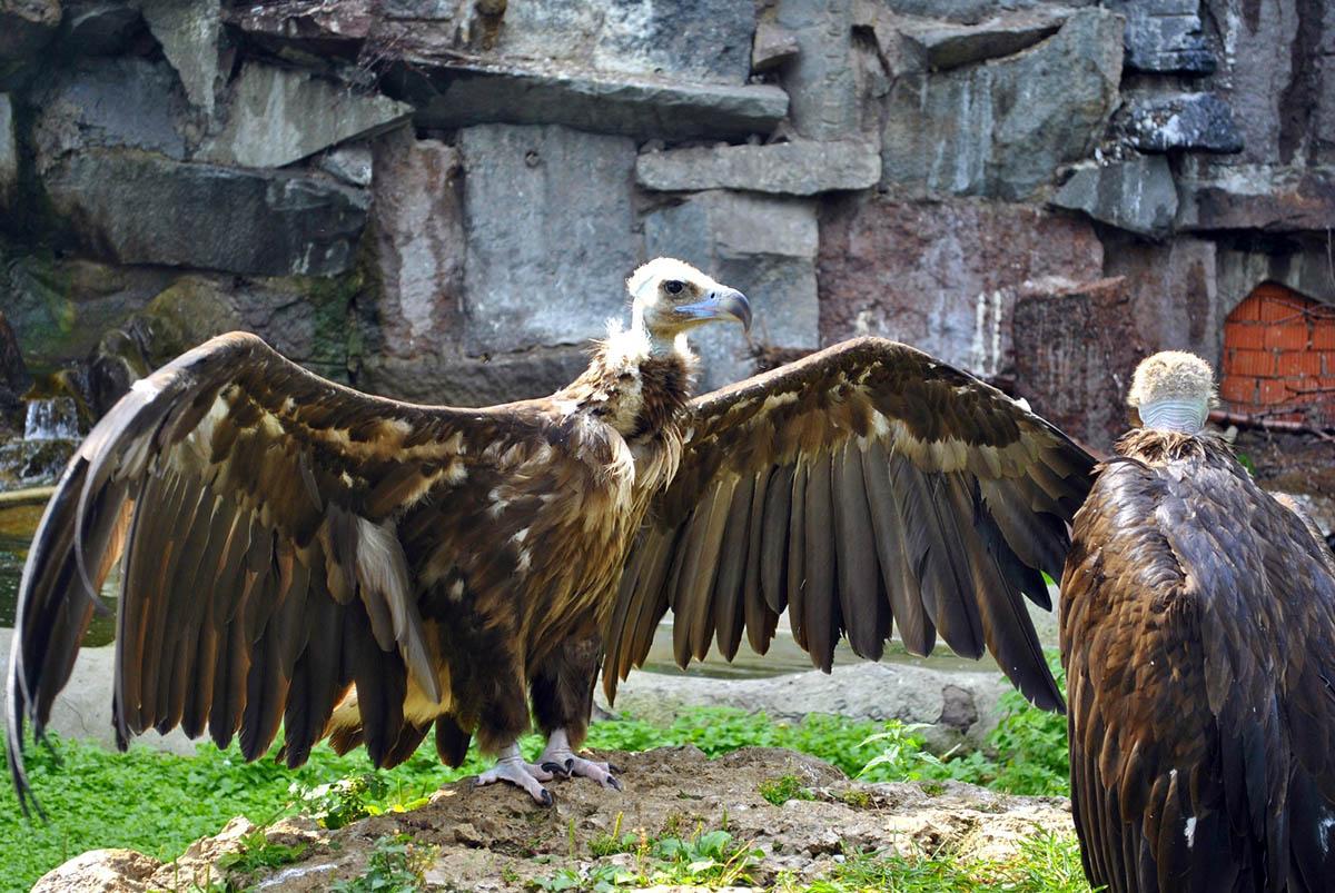 орлы в Московском зоопарке