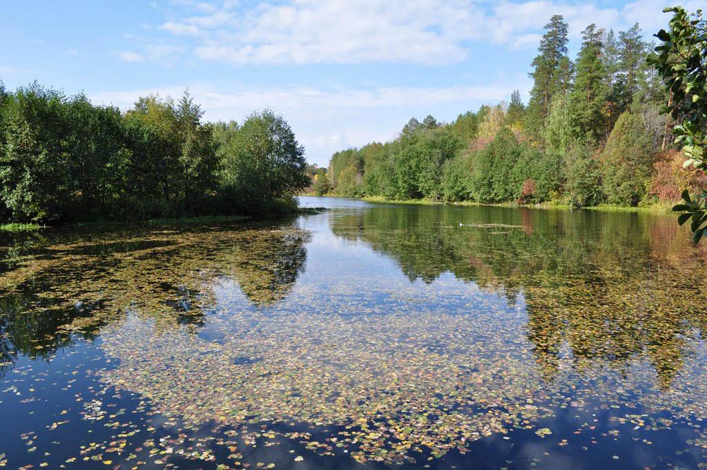 озеро Холерное, нацпарк Бузулукский бор