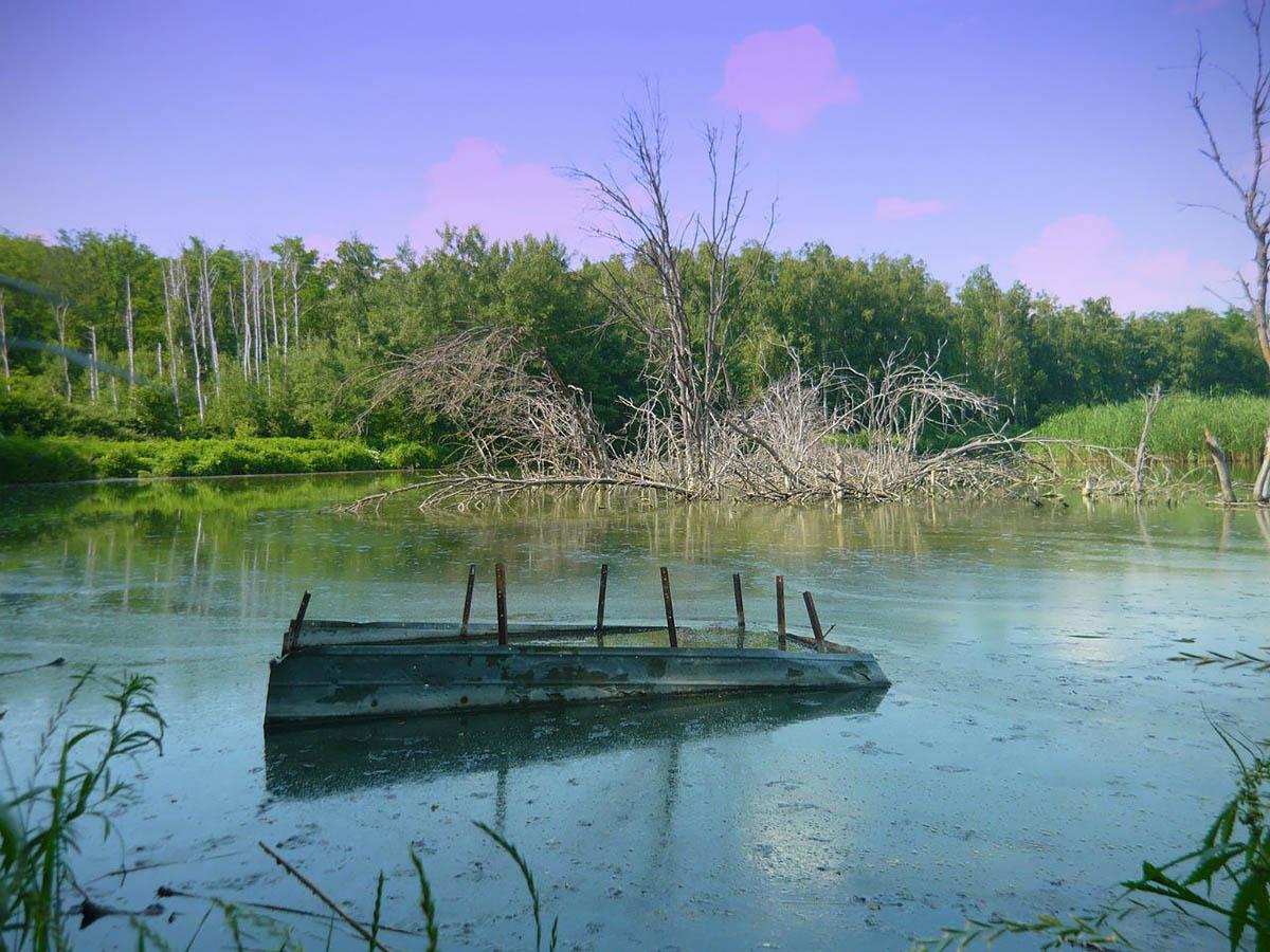 заказник Щепкинский лес в Ростове-на-Дону
