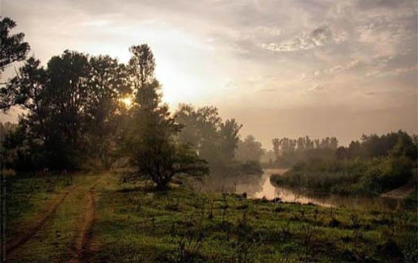 Парасоцкий лес, Полтавская область, Украина