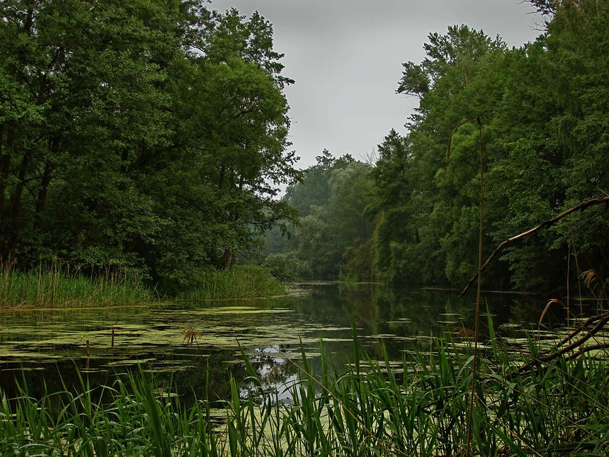 Фото природы воронежской облости 4