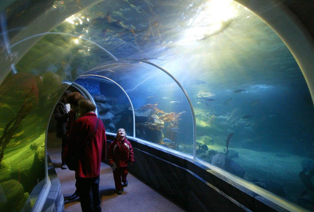 аквариум АкваДом