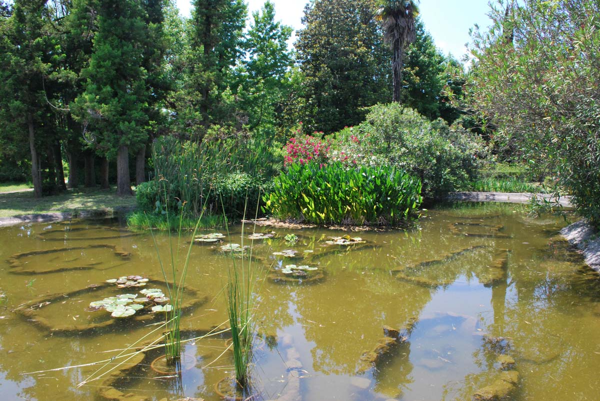 парк Южные Культуры в Адлере, Сочи