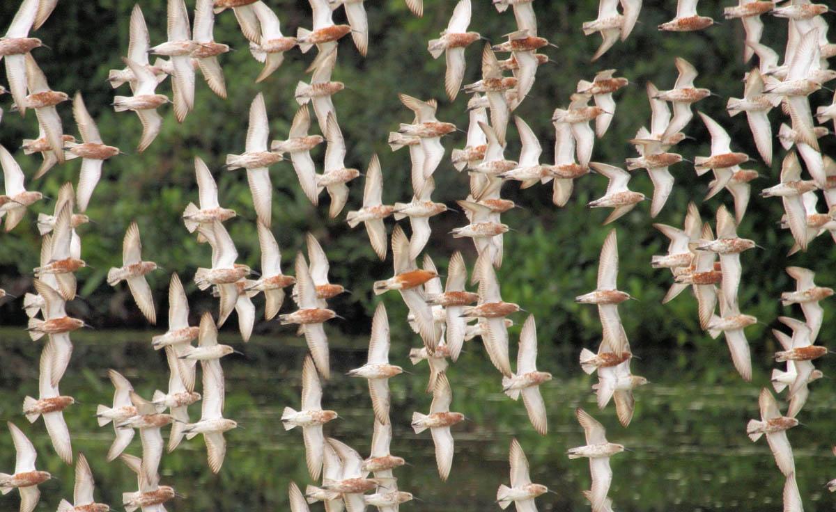птичий заповедник Май По, Гонконг