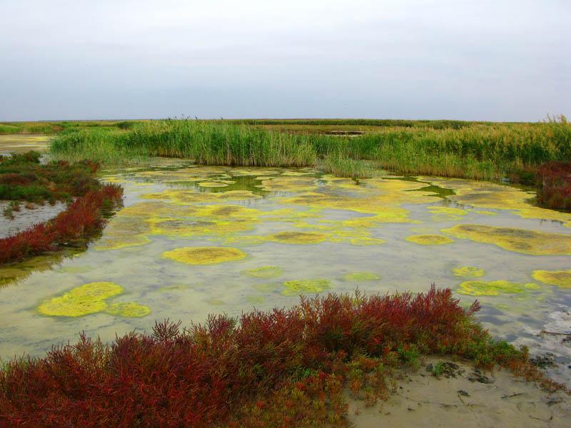 река Большая Сморогда, природный парк Эльтонский