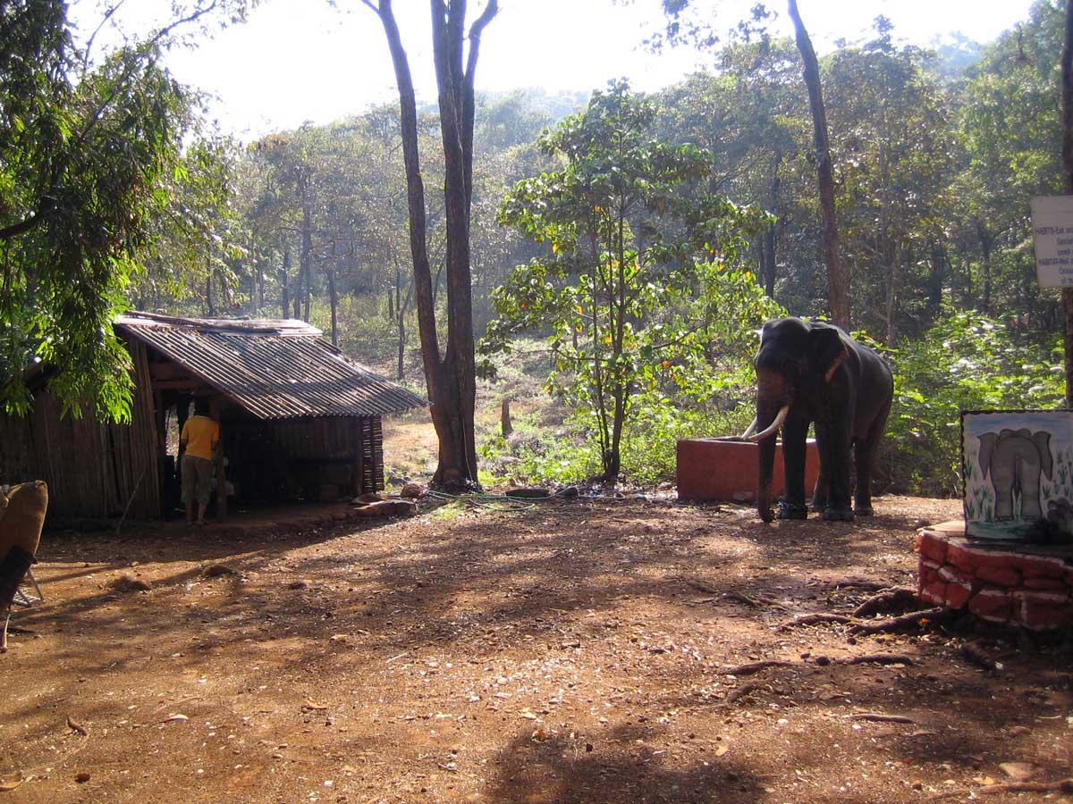 Bondla Wildlife Sanctuary, Goa, India