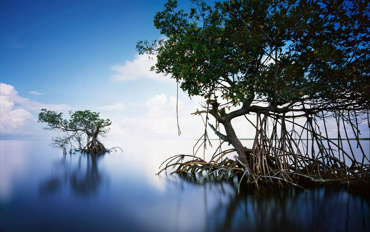 Everglades, USA