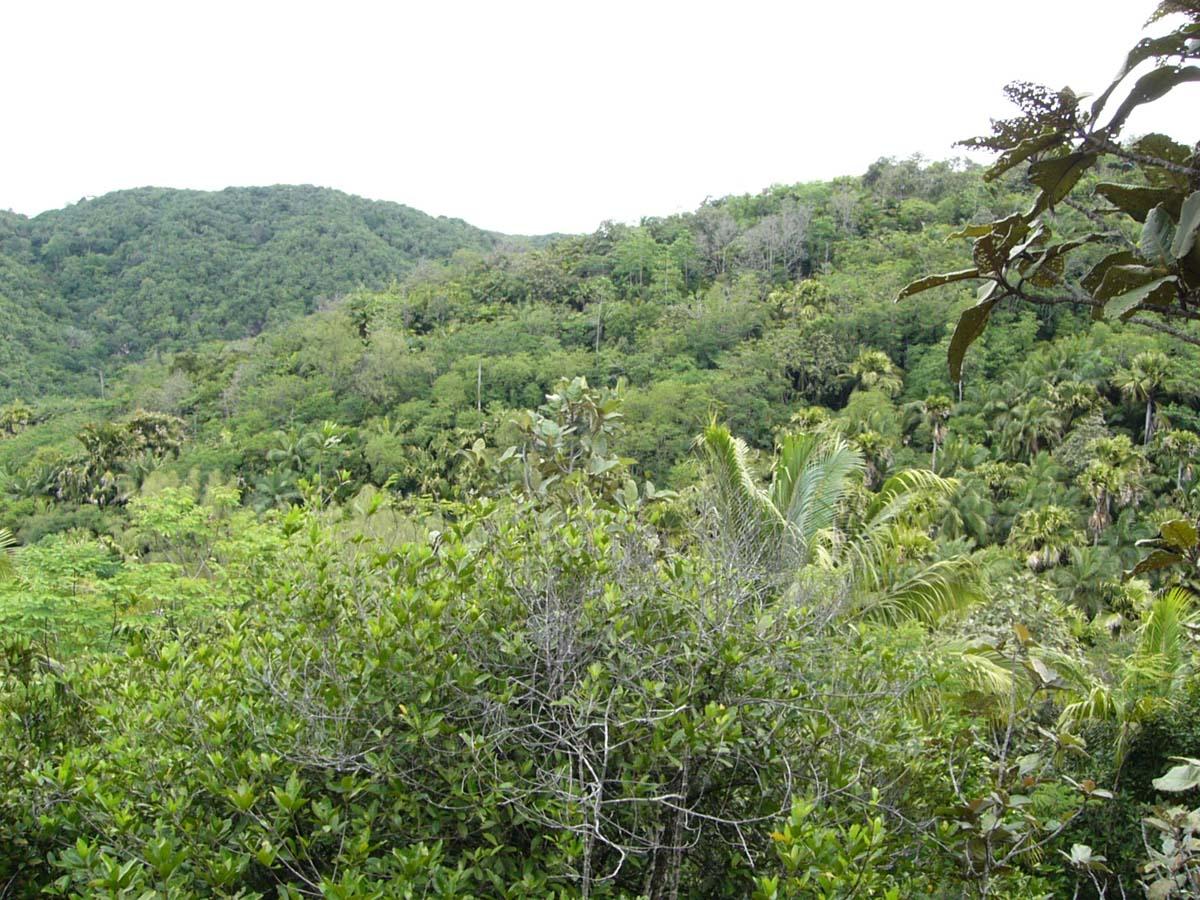 Nature Park Vall?e de Mai