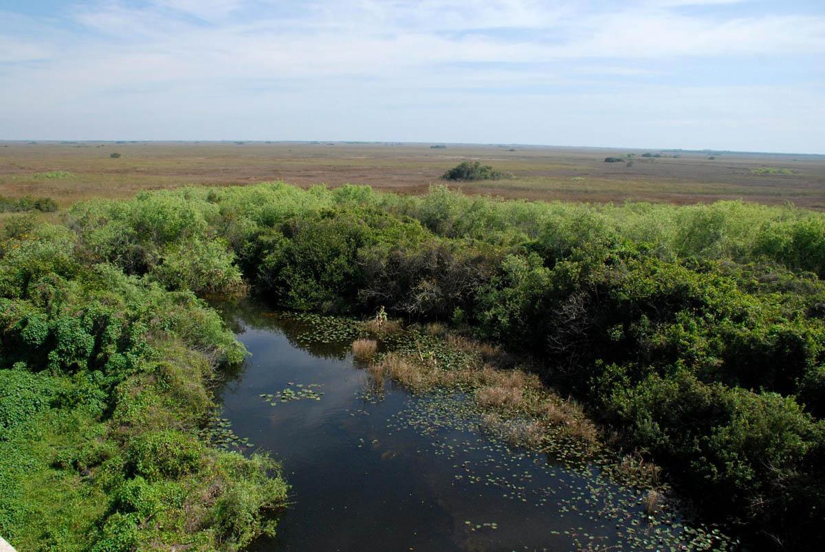 Observation Tower Shark valley Everglades