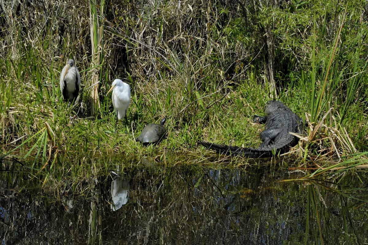 Shark Valley Everglades
