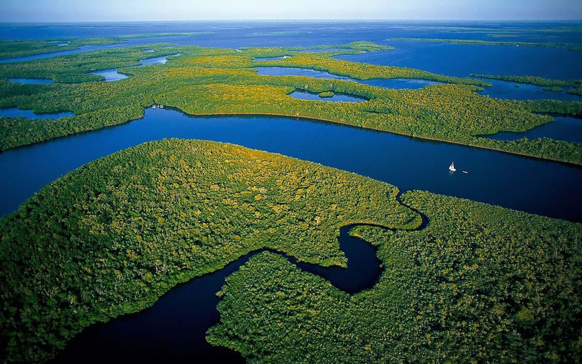 мангровые леса в нацпарке Эверглейдс, США