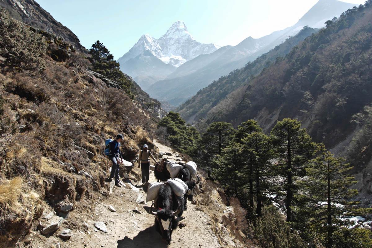 нацпарк Сагарматха, Непал