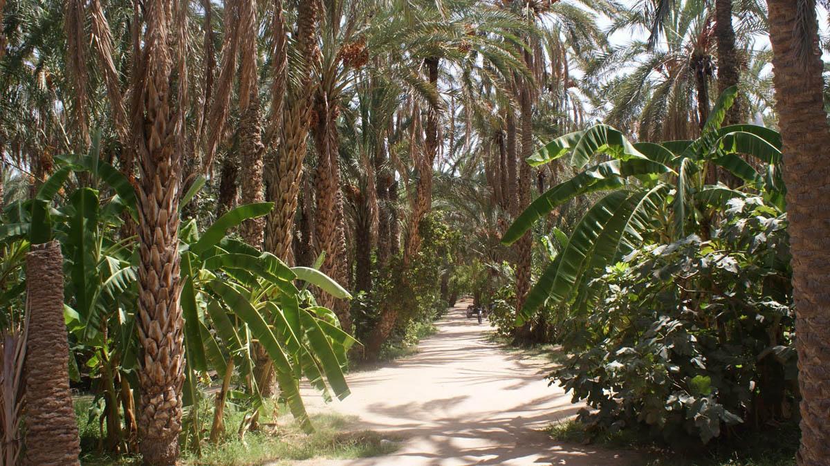 оазис Тозер в Тунисе