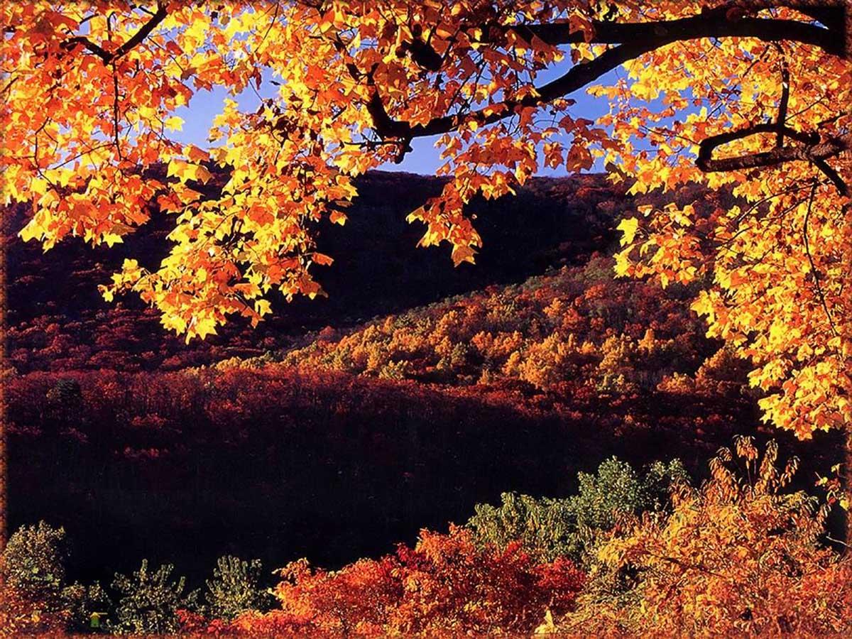 осень в нацпарке Шенандоа