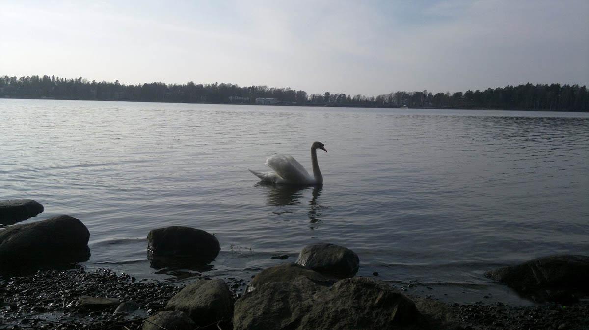 остров Сеурасаари, Хельсинки, Финляндия