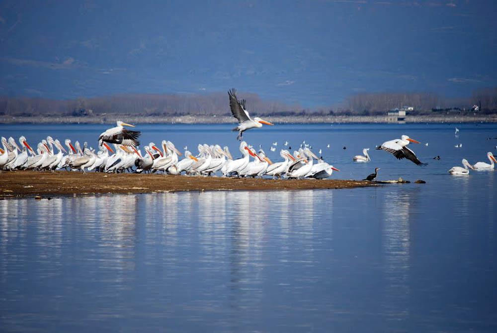 птицы на озере Керкини