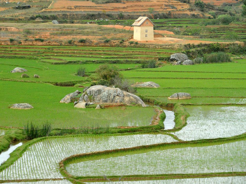 рисовые поля, Мадагаскар