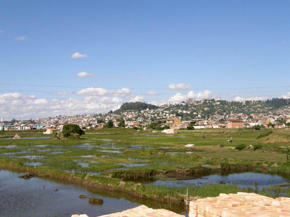 рисовые поля Мадагаскара