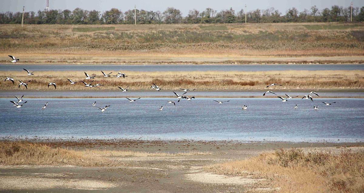 Ханское озеро, Ейск