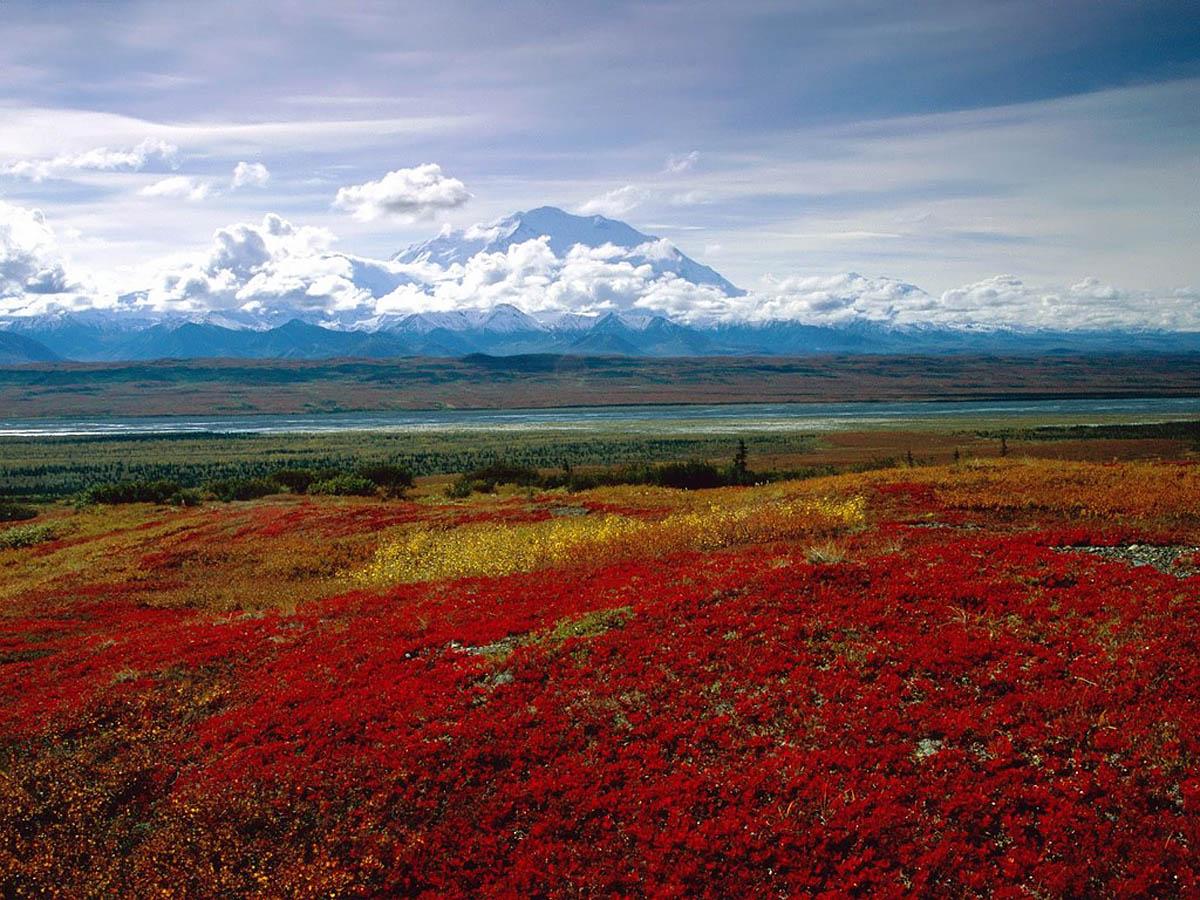 Национальный парк Денали, Аляска, США