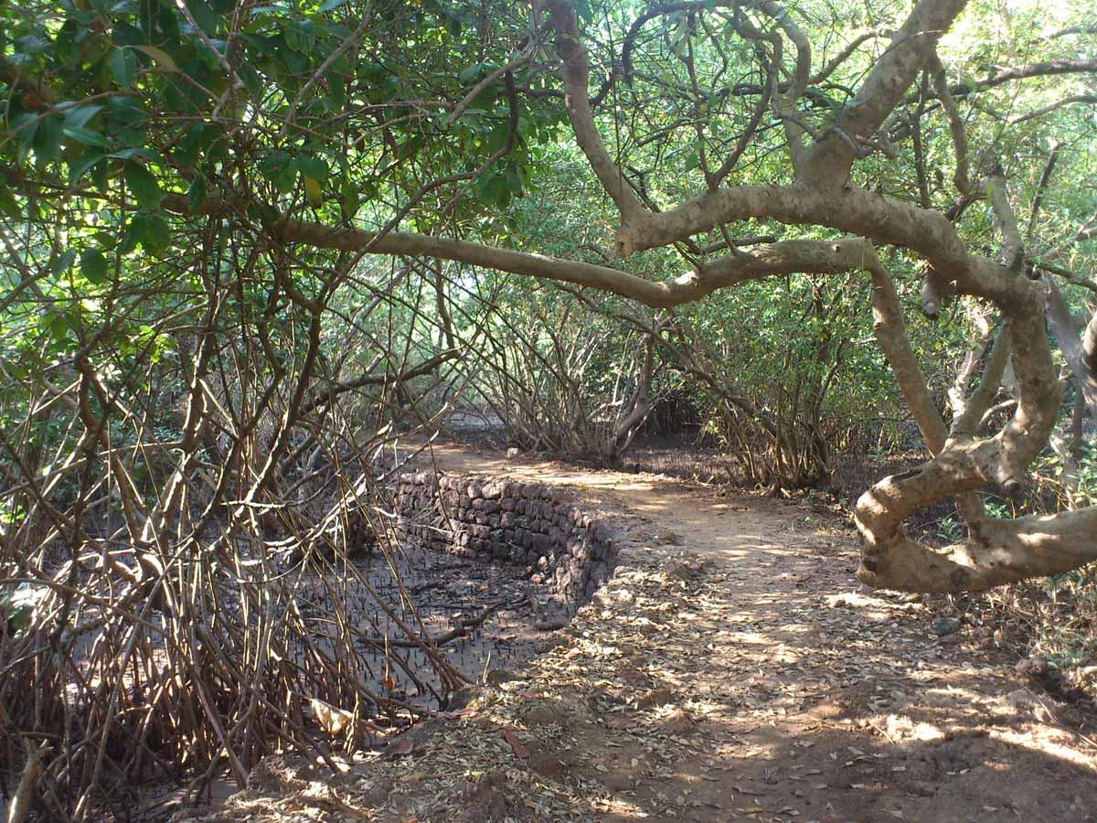 Salim Ali Bird Sanctuary, Goa, India
