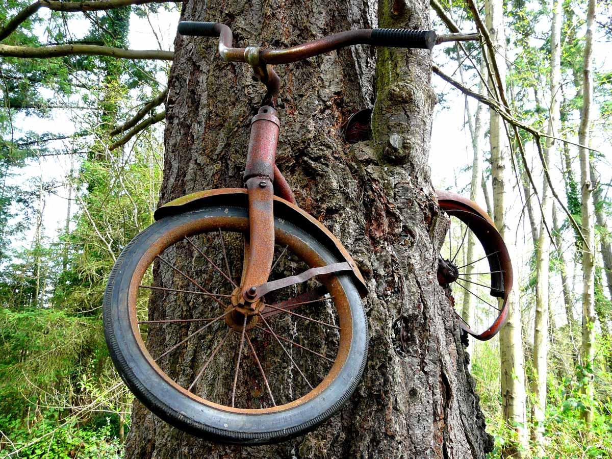 Привязал к дереву фото 5 фотография