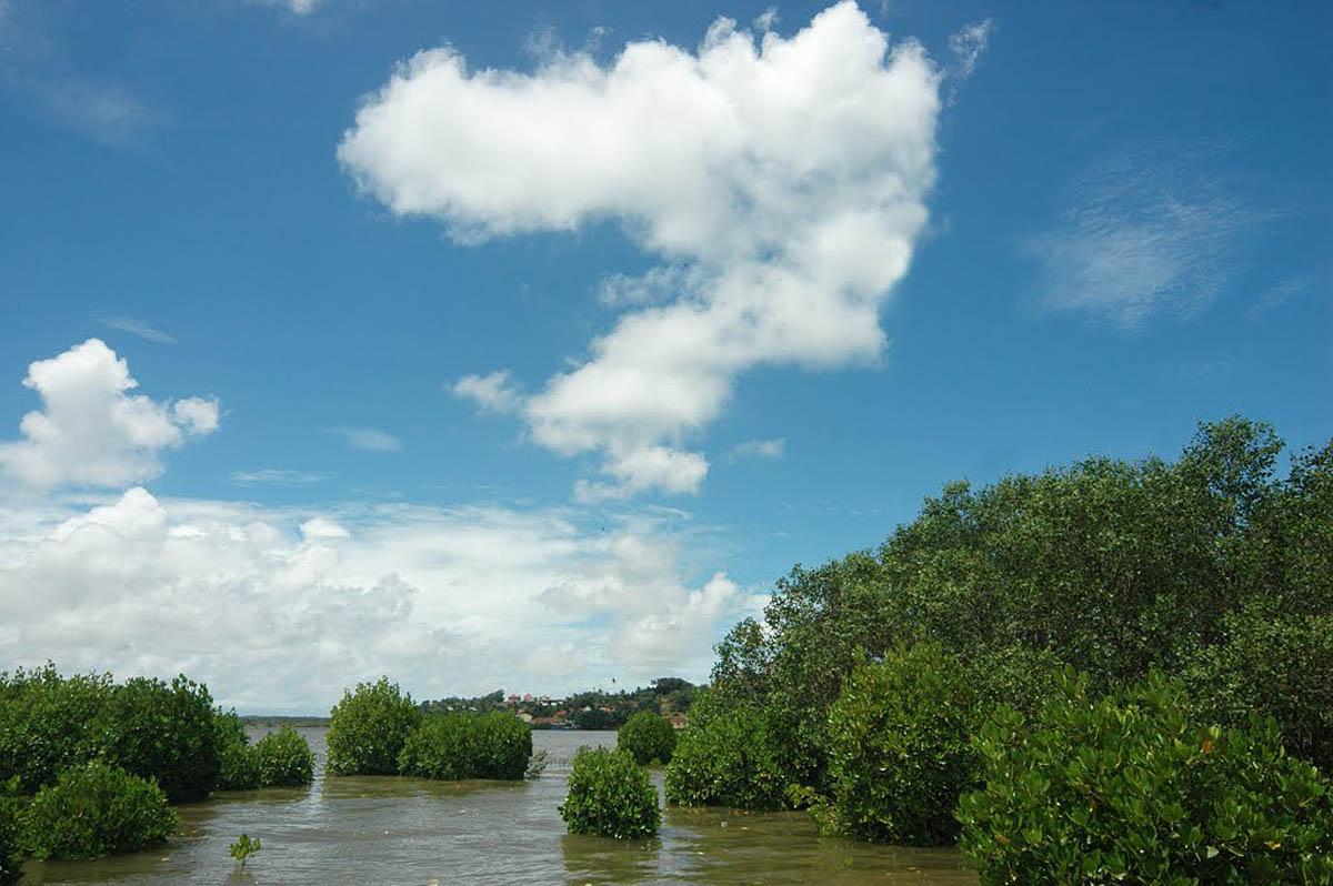 мангровые леса острова Чорао, Гоа