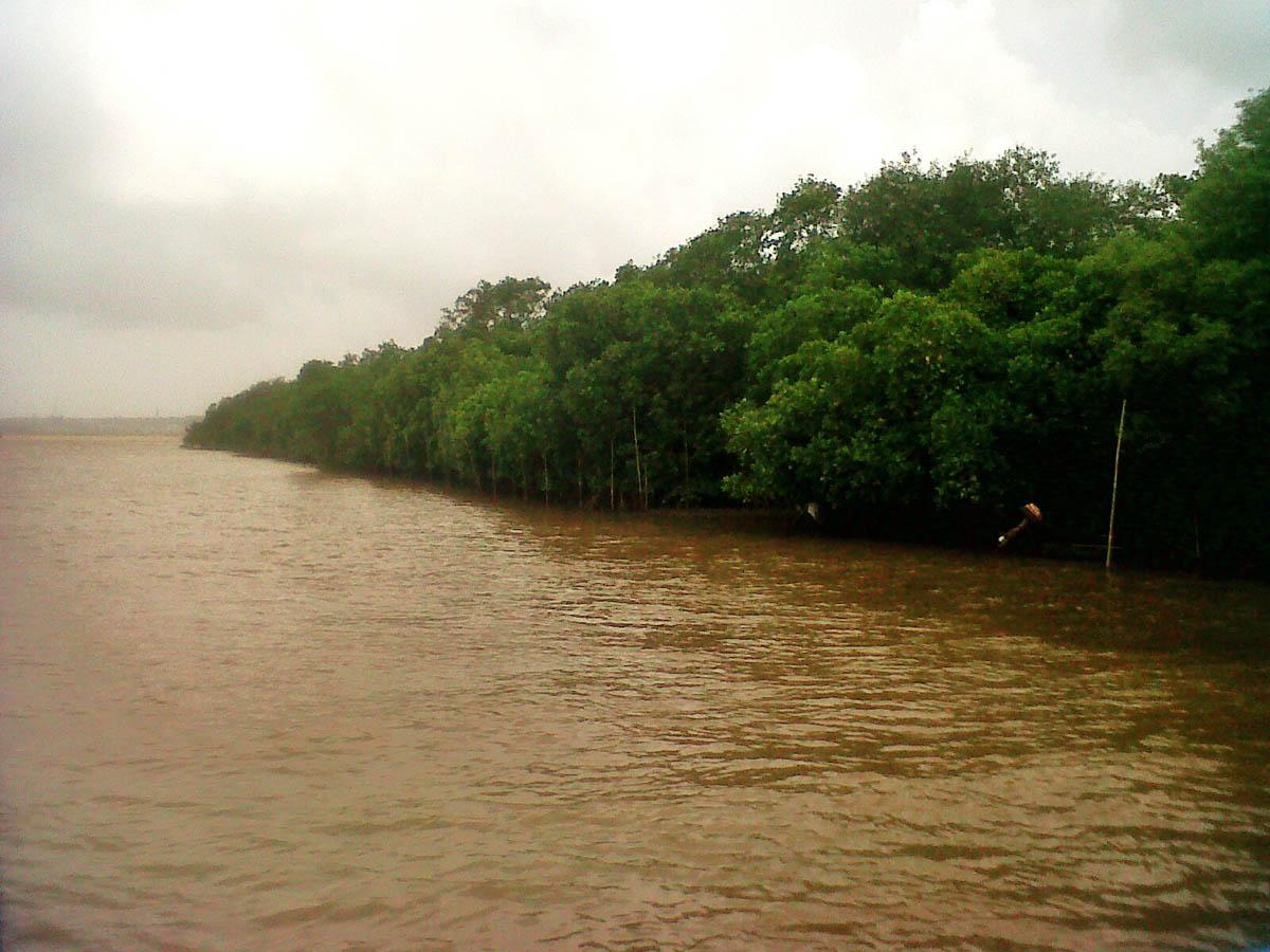 мангры на острове Чорао, Гоа