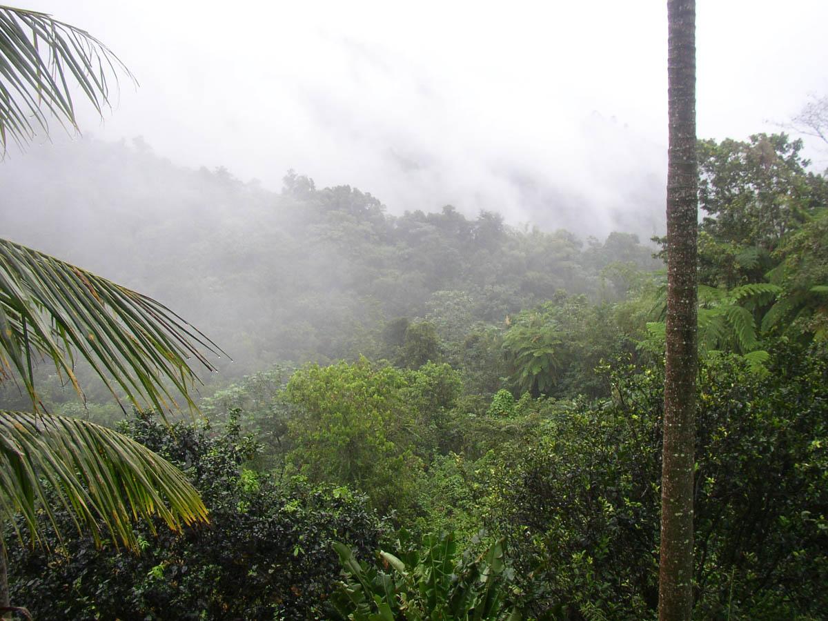 национальный парк Эль Юнке, Пуэрто-Рико