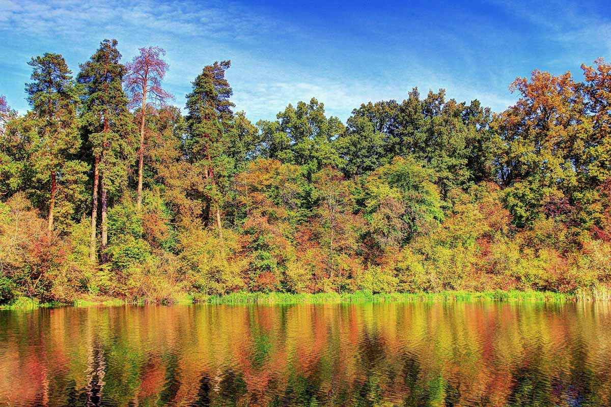 осень на озере Горащиха, Киев