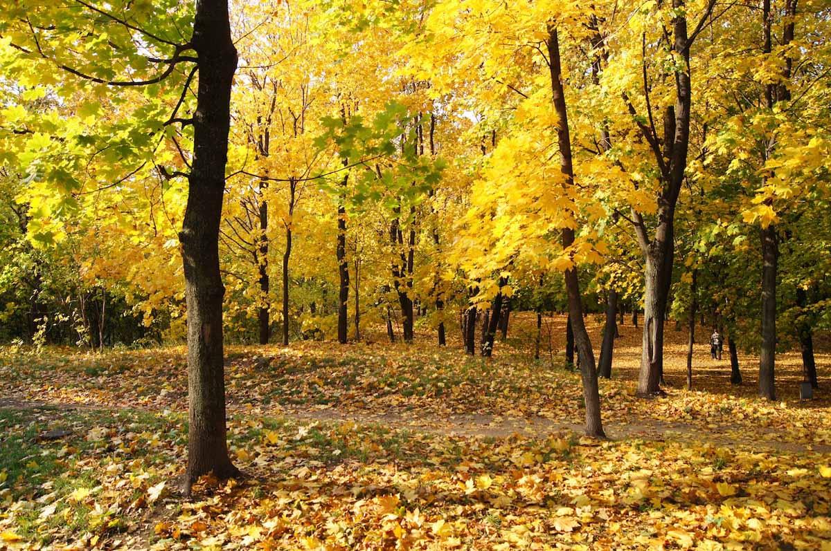 осень в Филевском парке, Москва