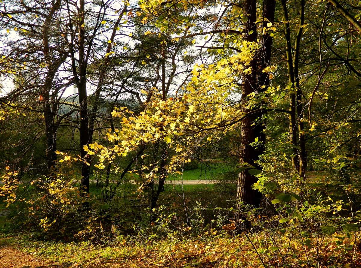 осень в парке Вингис, Литва