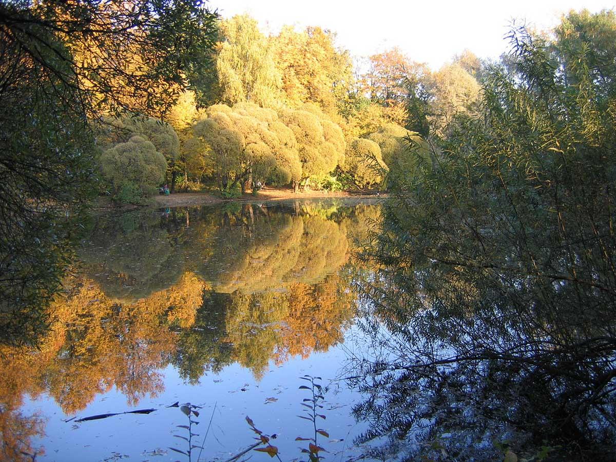 пруд в Филевском парке, Москва