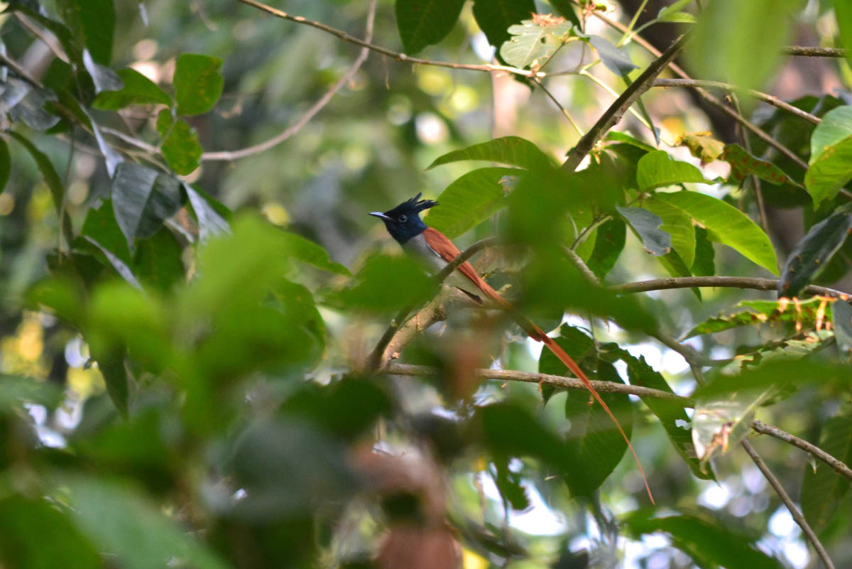 птичий заповедник Салим Али в Гоа