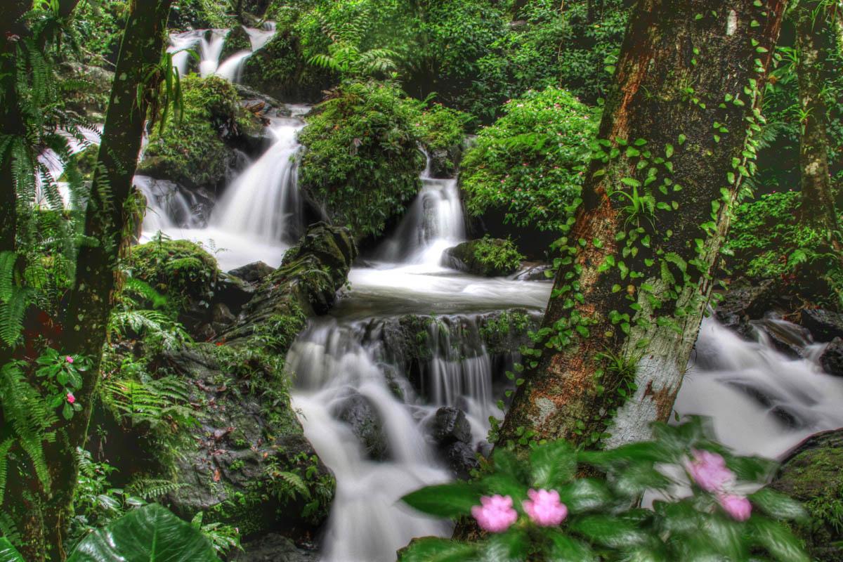 тропический лес Эль Юнке, Пуэрто-Рико