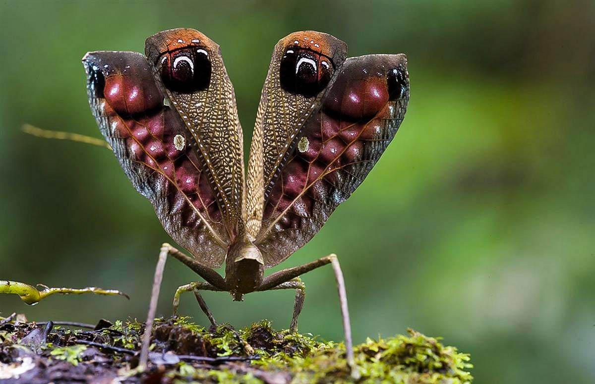 тропическое биоразнообразие