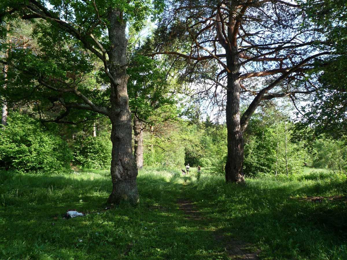 вековые деревья на озере Ленивое в Козельских засеках